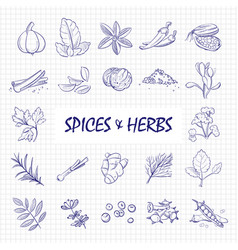 hand drawn spices and herbs big set on notebook vector image