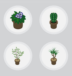 Isometric flower set of houseplant fern peyote vector