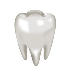 object white tooth molar vector image