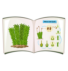 Book showing life cycle of moss vector