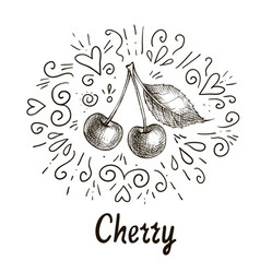 cherry drawing vector image