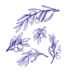 olive branches sketch style on white vector image