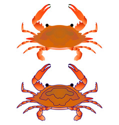 red crab isoleted on white flat gradient sea vector image