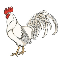 White rooster or cock vector