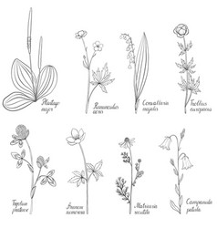 set of drawing flowers and plants vector image