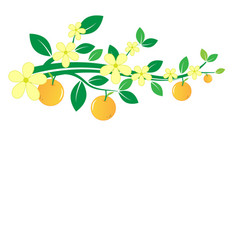 branches oranges and flowers on white vector image