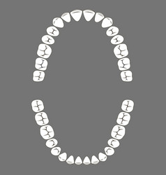 Chewing surface human teeth upper and lower jaw vector