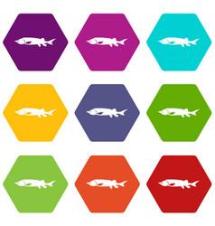 Fresh sturgeon fish icon set color hexahedron vector