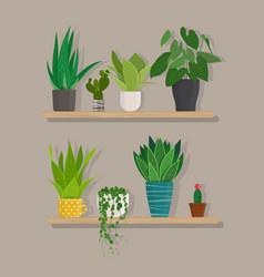 Green indoor house plants in pots on shelf vector
