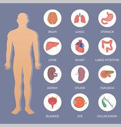 Human organs flat style banner vector