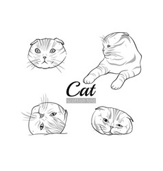 set cats scottish fold vector image