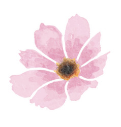 watercolor cosmos flower isolated on white vector image
