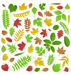 collection of autumn leaves vector image vector image