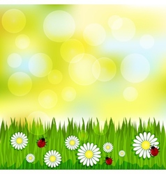 Spring blurred pattern with grass and chamomile vector image vector image