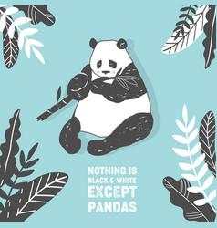 cute panda bear birthday greeting card vector image