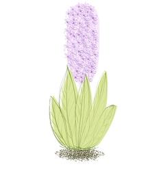 Doodle hyacinth vector
