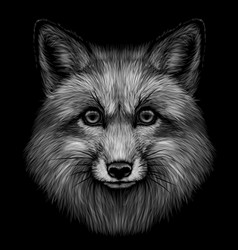 fox black and white graphic portrait fox vector image