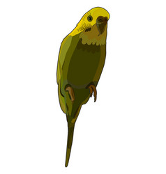 green budgerigar vector image