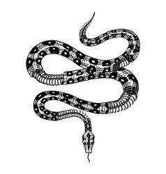 Half-skeleton a milk snake in vintage style vector