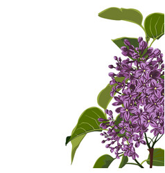 violet lilac branches with leaves elegant card vector image