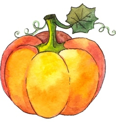 Watercolor painted pumpkin vector image
