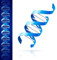 Blue dna vector image vector image