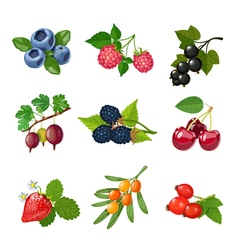 Berries Of Trees And Shrubs Set vector image vector image