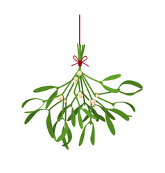 Christmas flower mistletoe festive vector