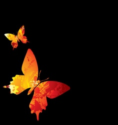 hot butterfly vector image