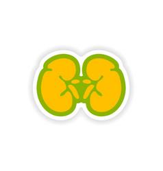Paper sticker on white background human kidney vector