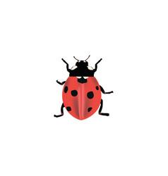 realistic ladybug element of vector image