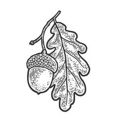 Acorn with oak leaf sketch vector