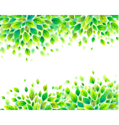green spring foliage frame on white vector image