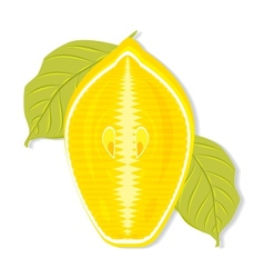 Half a lemon cut along vector image