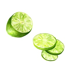 half of lime vector image