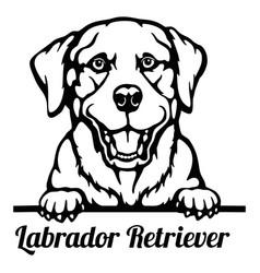 labrador retriever peeking dog - head isolated vector image
