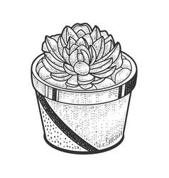 Succulent plant sketch vector