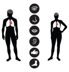 Medical Human body part icon vector image vector image