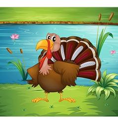 A turkey near the pond vector image