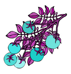 crazy blue turquoise tomatoes predatory vector image