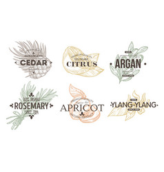Herbs spices and fruit isolated icon vector