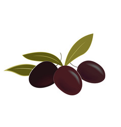 ripe olives and leaves vector image
