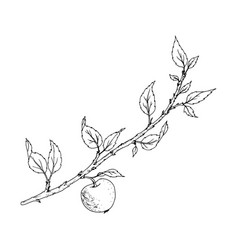 Tree branch with leaves and apple vector