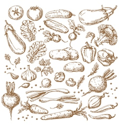 Vegetables sketch set vector