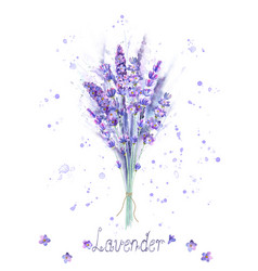 watercolor lavender bouquet lavender flowers vector image