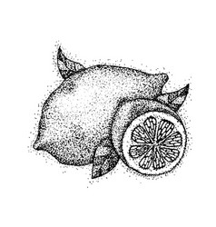 dotwork lemon fruit vector image