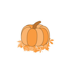 pumpkin on leaves isolated on white background vector image vector image