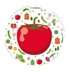 Red tomato vegetables fresh tasty diet vector