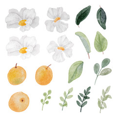 Watercolor white flower and orange fruit and vector