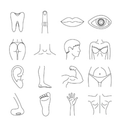 Body parts icons set outline style vector image